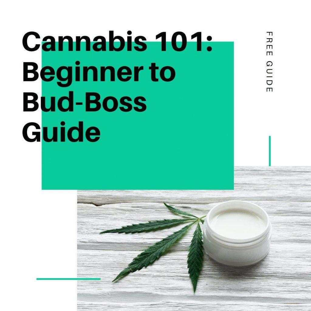 cannabis 101 beginners guide